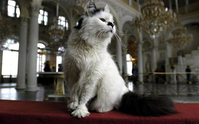 hermitage-muzesi-kedi