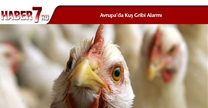 Avrupa'da Kuş Gribi Alarmı
